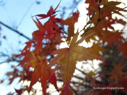 IMG_4035blog
