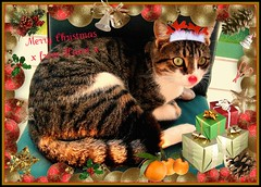Rudolf Hann says Merry Christmas! (kiwibyrd1) Tags: kissablekat bestofcats velvetpaws pet100 5boc lovelylovelyphoto howeveritsstillmylife boc1209