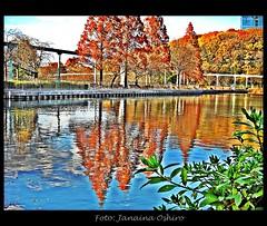 ♫ Autumn!!! ♫ (♫ Photography Janaina Oshiro ♫) Tags: água japan nagoya japão árvore reflexo hdr outono nikond90 janainaoshiro