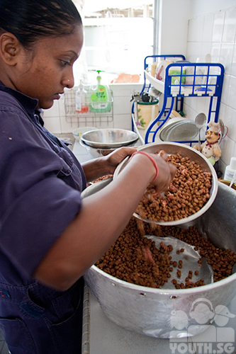 Mixing Wet And Dry Dog Food Ratio