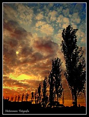 Atardecer (hectoromero) Tags: parque sunset espaa naturaleza tree nature silhouette alberi contraluz landscape atardecer soleil rboles tramonto nuvole sonnenuntergang wind perspective coucher silhouettes wolken paisaje viento du arbres nubes perspectiva nuages paysage  landschaft bume  siluetas paesaggio melilla backlighting     forestal    sagome  silhouetten            blinkagain rememberthatmomentlevel1 rememberthatmomentlevel2 rememberthatmomentlevel3 rememberthatmomentlevel5