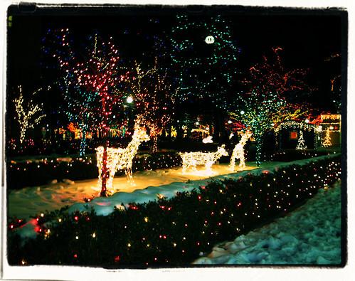 Christmas Tree Farm Utah
