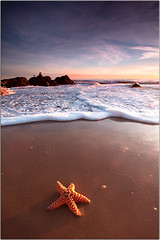 Day One (Extra Medium) Tags: sunset beach water sand bravo flickr surf waves starfish pch pacificocean discostarfish leocarrillo leocarrillostatebeach absolutelyrandomlyplacedstarfish nostarfishwereinjuredinthemakingofthispicture