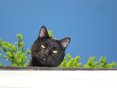 (* Sontheimer Pictures *) Tags: blue sky green cat blackcat lol watchingyou