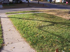 front yard leaves after