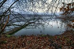 L'arbre couché ... (Prx.01) Tags: étang dombes rhônealpes france eau water arbres brume hiver waterscape landscape paysage