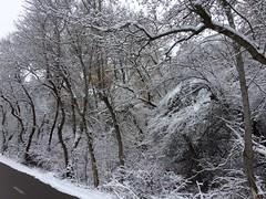 IMG_2224 (augiebenjamin) Tags: winter provocanyon mountains orem provo lindon utah snow clouds trees sky byu brighamyounguniversity art
