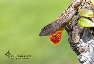 _O6A0275-Wanna Date? ©Dancing Snake Nature Photography