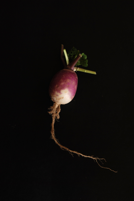 Turnip© by Haalo