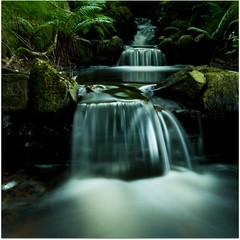 Forrest Falls (Samantha Nicol Art Photography) Tags: plants green nature water reflections outdoors nikon rocks long slow forrest falls explore shutter samantha frontpage nicol the4elements theunforgettablepictures alemdagqualityonlyclub