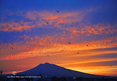 Crows into the Sunset (Hirosaki Japan).  Glenn Waters. (Explored & Front Page) Over 7,000 visits to this photo. (Glenn Waters in Japan.) Tags: sunset sky mountain west bird window birds silhouette japan clouds volcano office nikon dusk flight july vivid explore crow 12 hirosaki crows frontpage   2009 f28       48mm explored  nikond700  glennwaters  nikkor2470mmf28gedafs