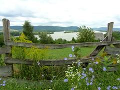 Zebegny, Duna river (Krisztina.Konczos) Tags: flowers summer field grass river landscape duna zebegny