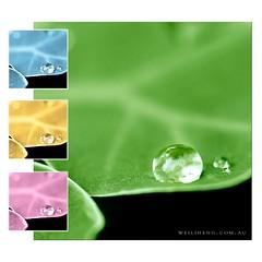 Boredem (Weidotcom) Tags: pink blue macro green water yellow closeup leaf backyard nikon box coffeeshop h2o canvas droplet tear f28 array arrange sigma105 sigma105mm d700