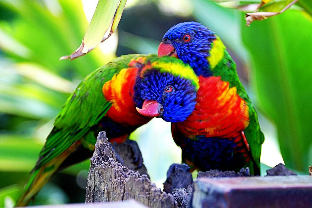 Bevard Zoo
