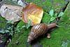 morning walk... (sasithorn_s) Tags: friends nature garden snail soe potofgold supershot anawesomeshot theunforgettablepictures betterthangood theperfectphotographer mallmixstaraward