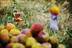 cueillette de prune