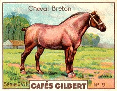 gilbert chevaux006