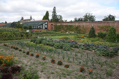 Walled garden veg plot