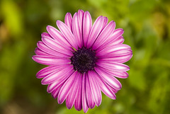 (_- Lucky -_) Tags: flores flower verde flor jardines lilas nikonargentina