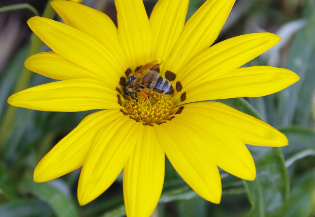 Bee likes yellow