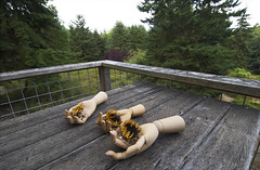 (shadowplay) Tags: table hands balcony meadow diagonal sunflowers whidbeyisland railing pastoral