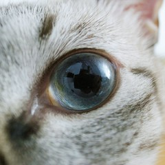 R0010019 (kenty_) Tags: blue cat eyes