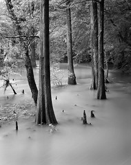 Little Maumelle River (clay.wells) Tags: park county summer white mountain black tree nature water monochrome rock creek canon river photography eos interesting stream long exposure state flood little you outdoor clayton wells september explore filter stump hero winner cypress arkansas recreation flowing usm knee polarizer 2009 ef 1740mm circular pinnacle flooded pulaski bigmomma f4l maumelle unanimous 40d challengeyouwinner thechallengefactory thepinnaclehof tphofweek12 img1646cbwcrop maumelleriverstompin claytonwells