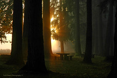 Dawn At McKercher Park (Nick Boren Photography) Tags: new morning fog by early nikon day d70 no tripod pacificnorthwest hdr bogen dawns brownsvilleoregon aided mckercherpark