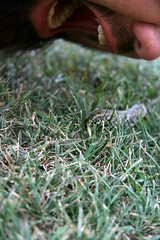 k pretending to eat a giant caterpillar (donuts!) Tags: italy italia olive caterpillar lazy tuscany villa podere agritourismo finerri