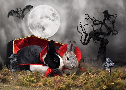 Red Door Vampire Bunny Spa Day