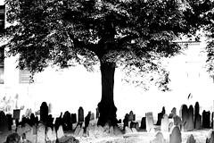 'tree' (Jerry Rodgers) Tags: cemeteries tree cemetery grave boston angel skeleton death massachusetts headstone tombstone gravestone fathertime grimreaper granaryburyingground gravemarker buryingground jerryrodgers