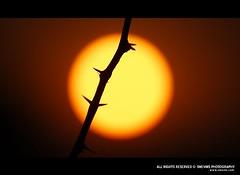 darker and darker (Smevin Paul - Thrisookaran !! www.smevin.com) Tags: light sunset red orange sun india dark paul photography evening nikon photos round thorns thorn smevin smevinpaul d40x malayalikkoottam smevins thrisookaran