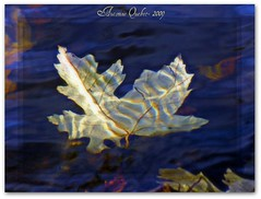 (Lara-queen) Tags: blue autumn lake canada fall nature water beautiful automne canon ilovenature leaf lac naturallight bleu feuille naturesfinest vob impressedbeauty irresitiblebeauty flickrdiamond wonderfulworlmix natureselegantshots afhht laraqueen
