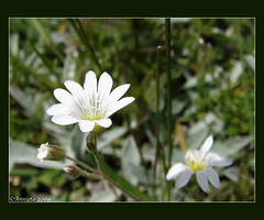 Witte ( Annieta  Off / On) Tags: italy holiday color nature june juni canon ilovenature this vacances vakantie is photo juin italia natuur powershot using piemonte illegal s2is farbe colori without canonpowershots2is 2009 couleur permission allrightsreserved aosta itali valledaosta valdaosta kleur aostavalley annieta bej betterthangood valledaosta usingthisphotowithoutpermissionisillegal