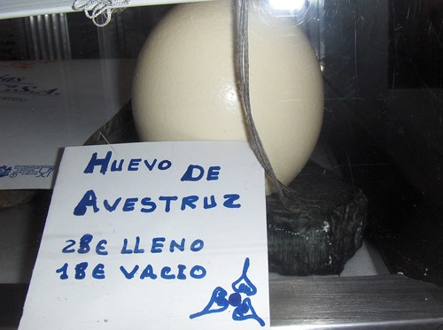 ostrich egg for sale