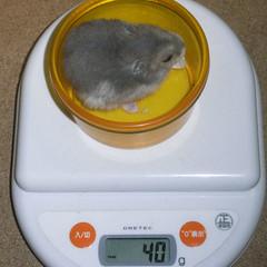 コー太は体重増加