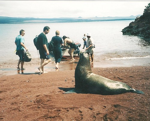 Galapagos-Rabida (9)