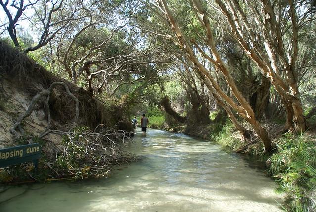 Fraser Island #18