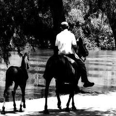 Ending the journey / Finalizando el da (Claudio.Ar) Tags: trees people bw horse nature water argentina river square topf50 buenosaires sony dsc pampa gaucho h9 sannicols 500x500 cruzadas bej abigfave visiongroup sirhenryandco claudioar claudiomufarrege goldenart artofimages saariysqualitypictures imagesforthelittleprince worldsartgallery absolutelyperrrfect oracope