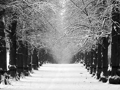 Lime Tree Avenue in Winter (Black and White Version) (DaveKav) Tags: road uk schnee winter england white snow cold snowy hiver freezing olympus neige icy avenue nationaltrust nottinghamshire 2010 deepfreeze clumber e510 clumberpark fourthirds bigfreeze limetreeavenue thebigfreeze january2010 frozenbritain perspectives2010 nottsperspectives2011