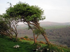 Windswept trees (Katie-Rose) Tags: uk trees wales hill windswept pembrokeshire katierose fbdg canondigitalixus95is viewacrossthevalley