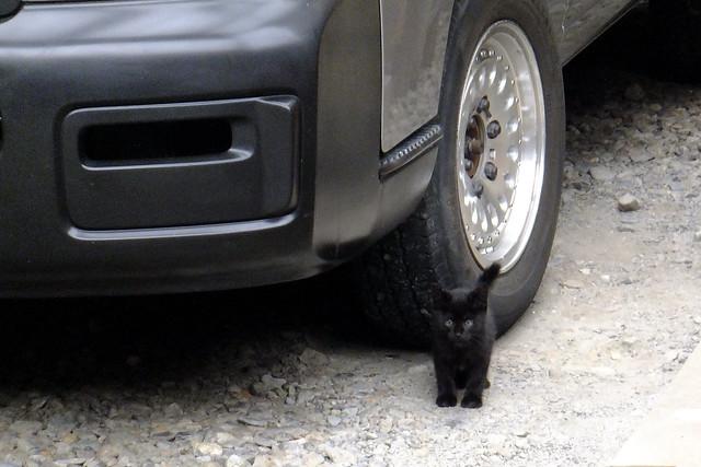 Today's Cat@2011-06-12