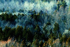the mixed  forest