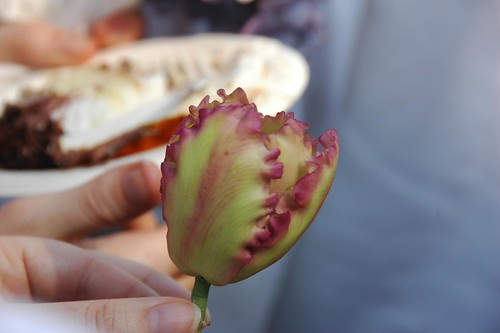 Edible Tulip
