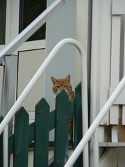 first floor cat (koko_pictures) Tags: green amsterdam cat stair balcony peeking 2009