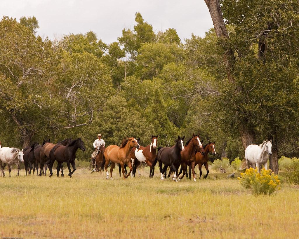 Zappata Ranch-14 by chaunceydavis818, on Flickr