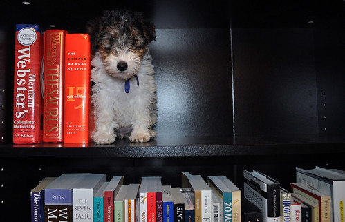 Bookend Puppy