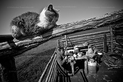 Shepherds in Tuva (Mieszko Stanislawski) Tags: boy bw mountain man male cat russia shepherd siberia sayan tuva babel syberia rosja russianfederation pasterze saian tuwa mieszko stanislawski otherrussia czaban boratajga lopczik suthol