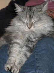 Ophelia (webmink) Tags: cat ophelia