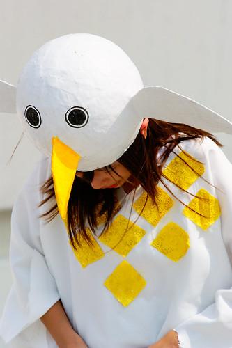 彩排中的和平鴿,來自珍古德協會